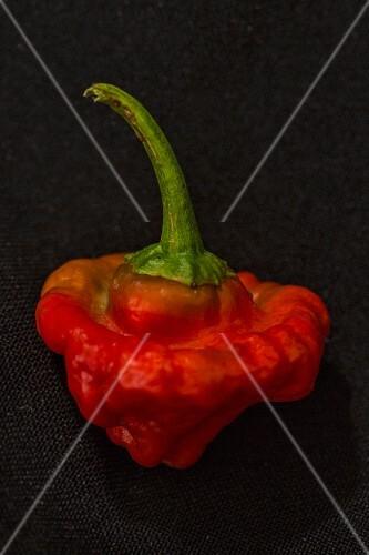 A Red Cap Mushroom chilli pepper
