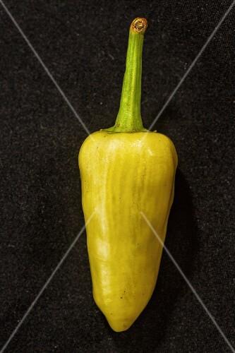 A Sorte Santa Fe Grande chilli pepper