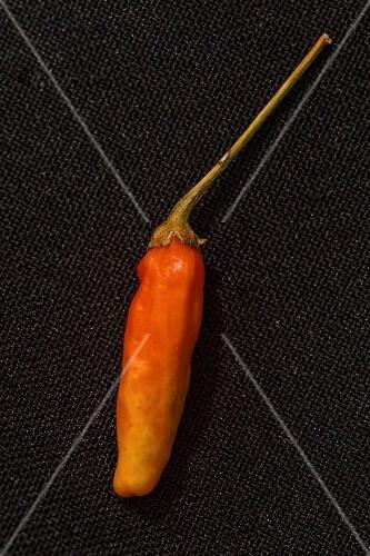 A Tabasco chilli pepper