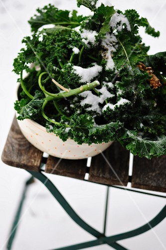 Fresh kale in a bowl on a garden chair dusted with snow