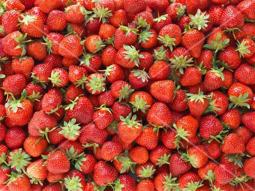 Overall of strawberries
