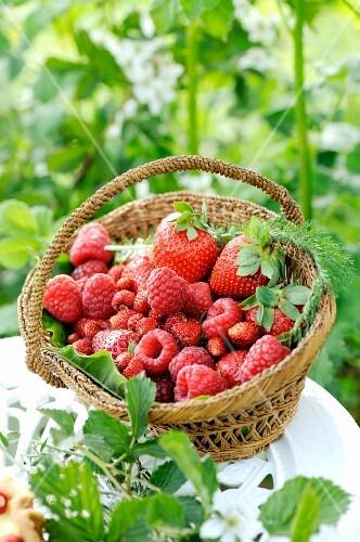 Fresh raspberries, strawberries and wild strawberries in a small basket