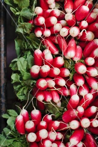 Bundles of radishes