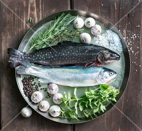 Fresh rainbow trout, char, garlic, thyme, salt, pepper, rosemary and oregano on a tray