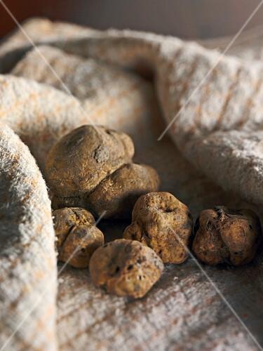 White truffles on a tea towel