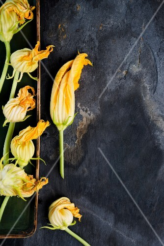 Courgette flowers (seen from above)