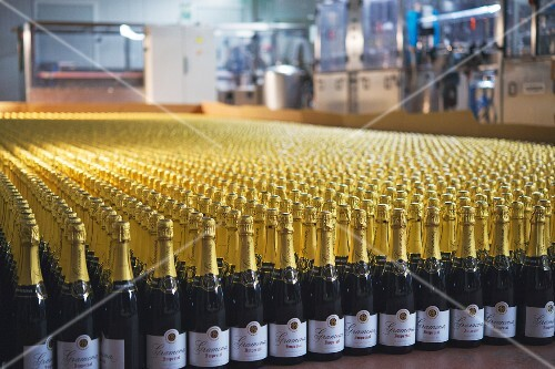 Bottles of cava in a filling system at the Gramona winery (in El Penedes, Spain)