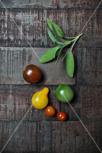 Tomatoes with fresh sage on a dark wooden surface