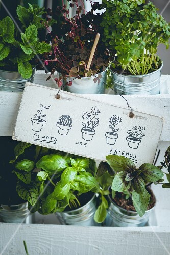 Assorted herbs in pots decorated with a painted sign