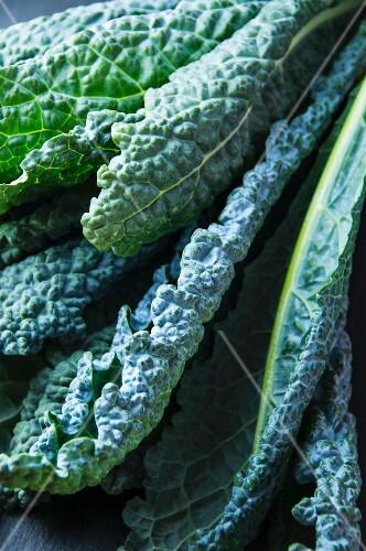 Lacinato kale leaves (close-up)