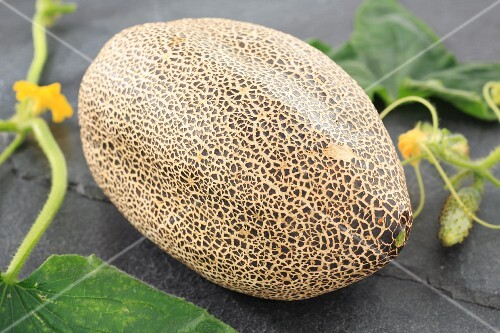A sikkim (an Indian 'rock melon')