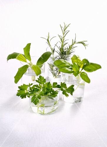 Feesh herbs in glasses of water