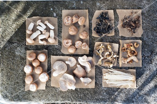 Assorted fresh and dried edible mushrooms on paper
