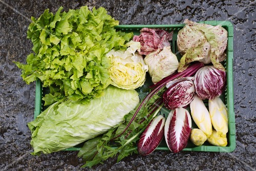 Assorted varieties of winter lettuce in a green box (seen from above)