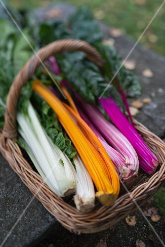 A basket of chard in different colours