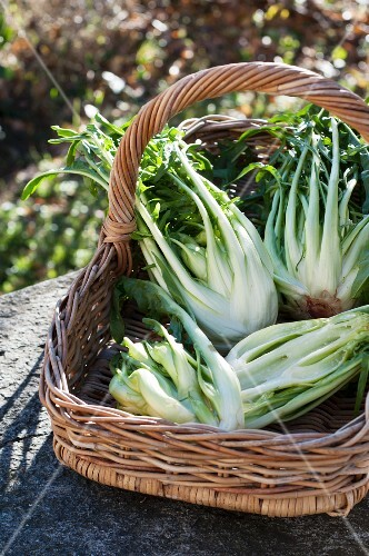 Assorted varieties of chicory in a basket