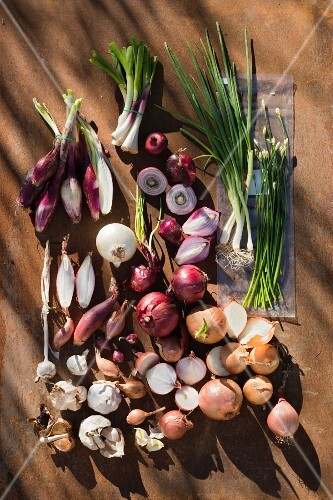Assorted onion varieties and garlic