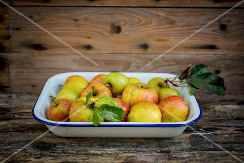 Fresh organic apples in an enamel dish on a wooden surface