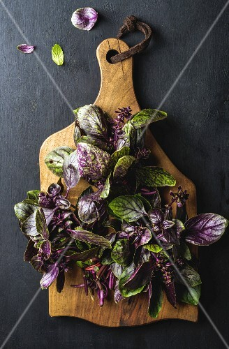 Fresh basil bunches on wooden serving board over dark background