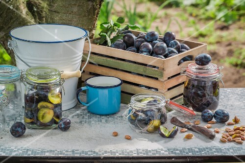 Fresh and preserved plums in glass jars on a garden table