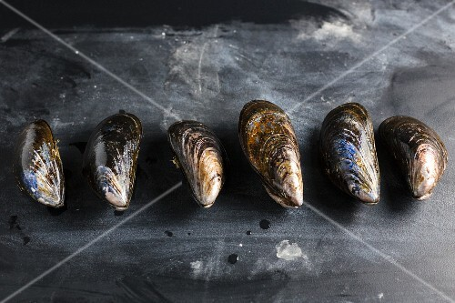 A row of mussels on a slate slab