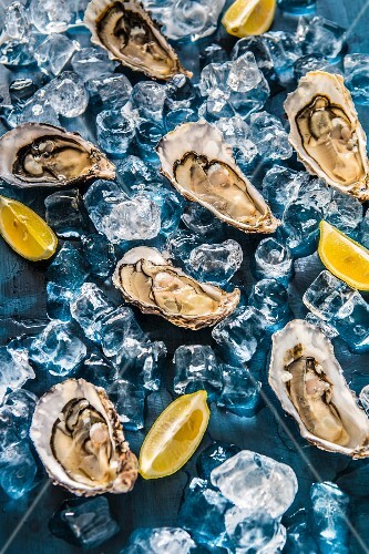 Fresh oysters with lemon wedges and ice cubes