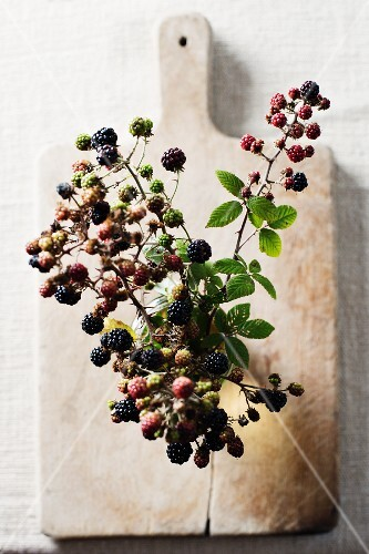 Blackberry sprigs in a vase on a wooden board (seen from above)