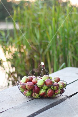 A wire basket with apples on an outdoor table