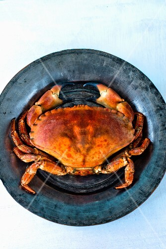 A crab on a tin plate (seen from above)