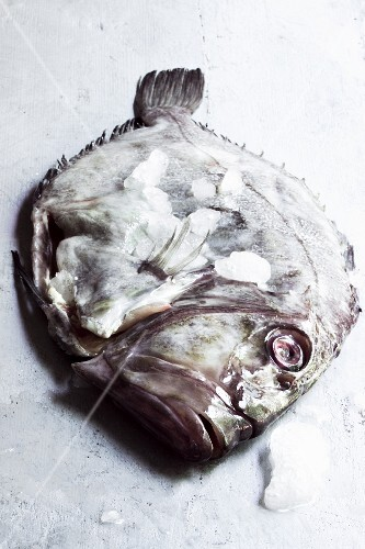 A fresh John Dory fish