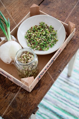 Homegrown sprouts in a glass jar and a bowl