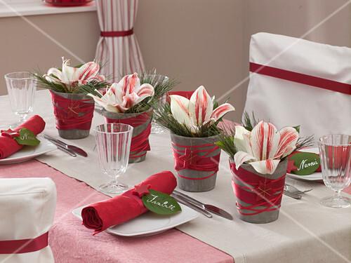 weihnachtliche tischdeko mit amaryllis bild kaufen 12148849 friedrich strauss. Black Bedroom Furniture Sets. Home Design Ideas