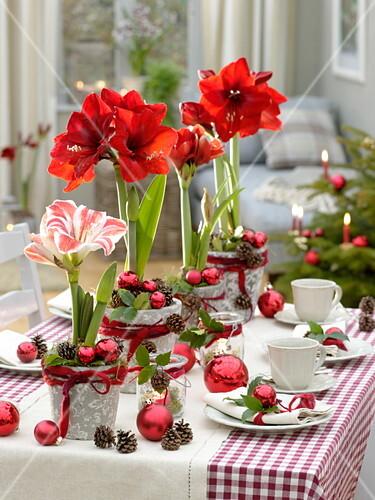 Rot Weisse Amaryllis Tischdeko Bild Kaufen 12171183