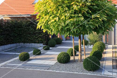 moderner vorgarten mit buxus buchs bild kaufen 12184013 friedrich strauss. Black Bedroom Furniture Sets. Home Design Ideas