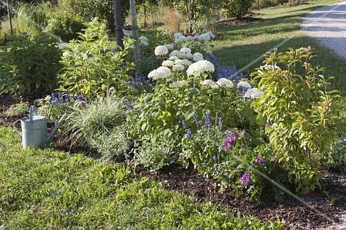 beet mit strauch hortensien bepflanzen bild kaufen 12187545 friedrich strauss gartenbildagentur. Black Bedroom Furniture Sets. Home Design Ideas