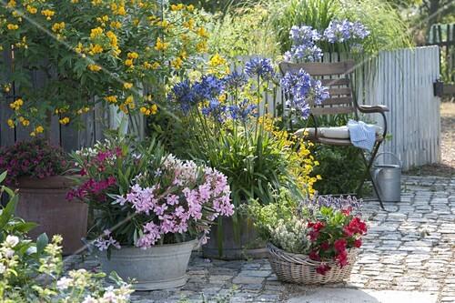 kuebelpflanzen terrasse mit schmucklilien bild kaufen friedrich strauss gartenbildagentur. Black Bedroom Furniture Sets. Home Design Ideas