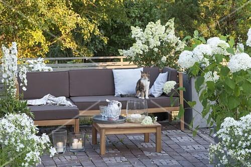Terrasse Mit Weissen Pflanzen Bild Kaufen 12191777