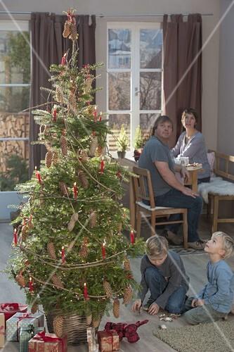 Weihnachtsbaum Natürlich.Lebende Koreatanne Als Weihnachtsbaum Bild Kaufen 12193813