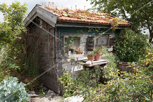 verwunschenes kleines gartenhaus im bild kaufen 12193227 friedrich strauss gartenbildagentur. Black Bedroom Furniture Sets. Home Design Ideas
