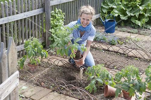 In Die Likebox Legen. Aus Der Likebox Entfernen. In Den Warenkorb Legen.  12197219. Beet Mit Tomaten Und Ringelblumen Im Biogarten Anlegen