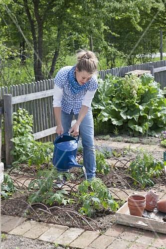 In Die Likebox Legen. Aus Der Likebox Entfernen. In Den Warenkorb Legen.  12197223. Beet Mit Tomaten Und Ringelblumen Im Biogarten Anlegen