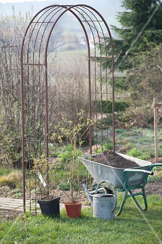 kletterrose an rosenbogen pflanzen bild kaufen friedrich strauss gartenbildagentur. Black Bedroom Furniture Sets. Home Design Ideas