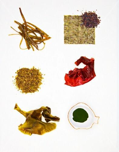 Various types of algae: sea spaghetti, nori, sea salad, dulse, wakame, chlorella