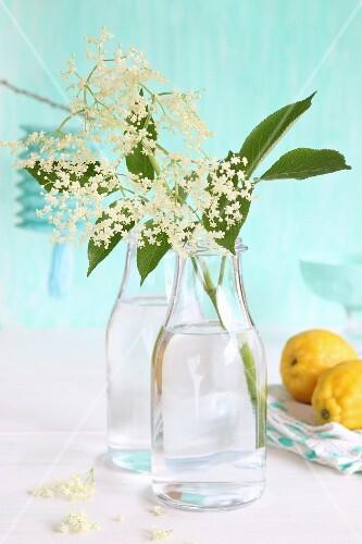 Elder flowers in glass bottle next to lemons