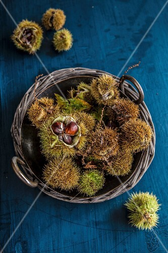 Chestnut in a basket