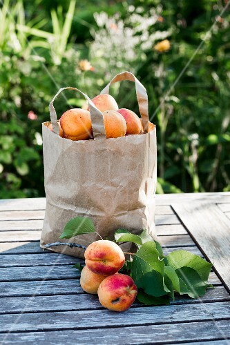 Hand-picked apricots in paper bag on wooden garden table in sunlight