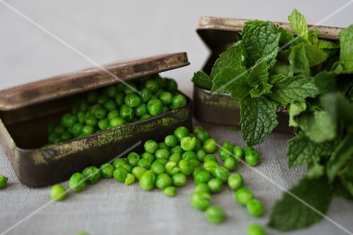 Mint and Pea Ingredients in Tins