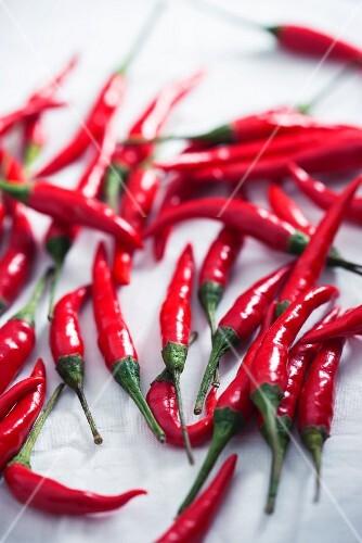 Frische rote Chilischoten