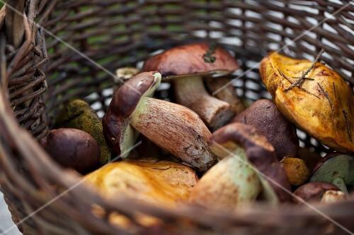 Basket of fresh forest mushrooms