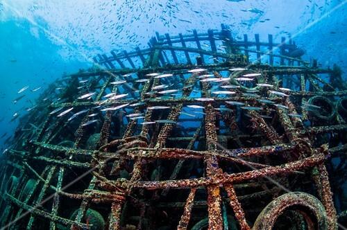 Artificial reef and barracudas